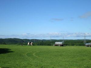 牧草地に牛