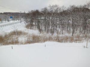 春の雪は直ぐに融ける