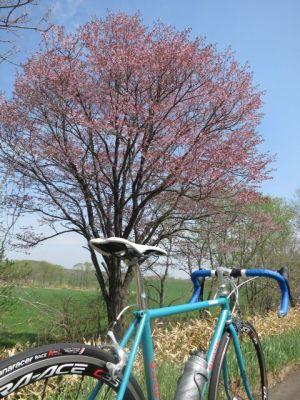 毎年恒例の山桜撮影ポイント