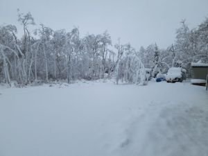 白樺の木がぁぁぁ・・・