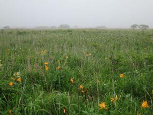 霧の霧多布湿原