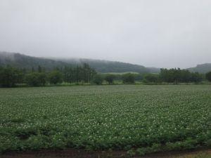 清里 ジャガイモ畑