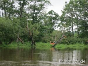 川から見る鹿は、また違う(笑)