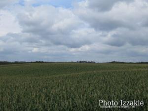 デントコーン畑に厚い雲