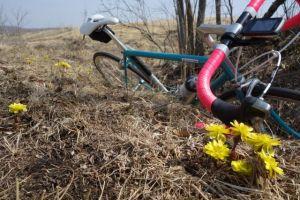 春の訪れを知らせる、福寿草