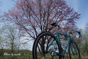 桜とQUARK2