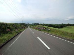 両沿道にルピナス(ルピナスは雑草ですw)