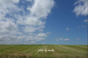 刈り取られた牧草地
