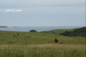 オス鹿の群れ