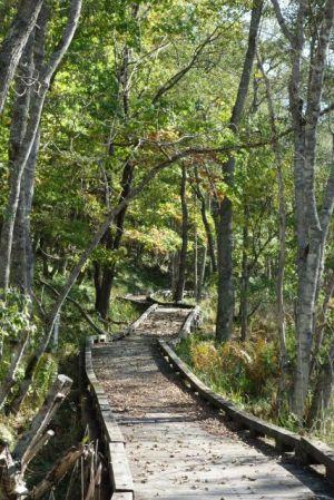 立派な木道