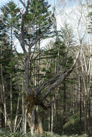 生命力を感じる木