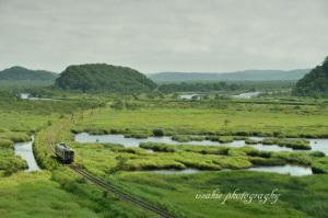 夏の別寒辺牛湿原