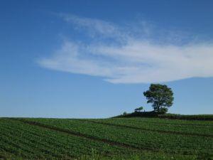 青い空に緑の大地